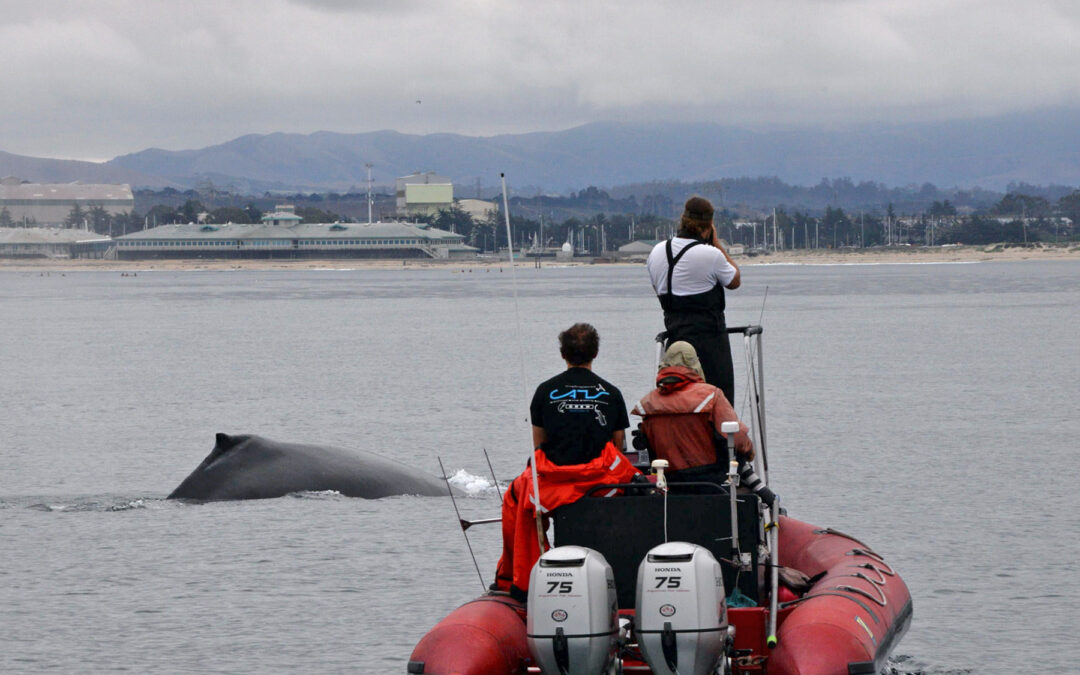 New Study Reveals COVID-19 Pandemic Impact on Vessel Noise in Monterey Bay National Marine Sanctuary